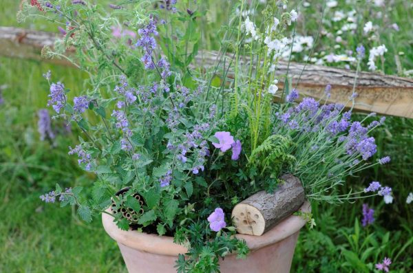 How to make a pot to attract the bees 1