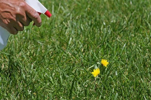 17 homemade solutions against weeds 1