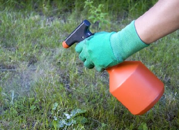 17 homemade solutions against weeds 3
