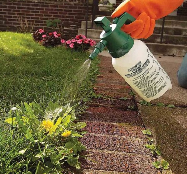 17 homemade solutions against weeds 14