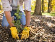 imagen El mejor momento para plantar árboles