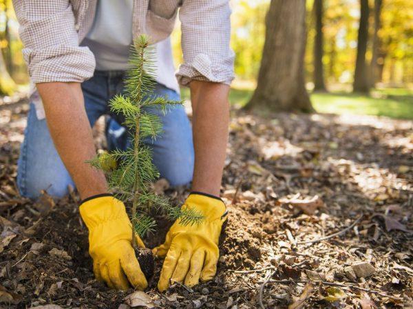 El mejor momento para plantar rboles for Arboles para plantar en invierno