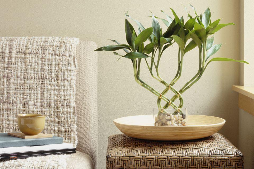 Cultivando el bamb de la suerte - Jardineras con bambu ...