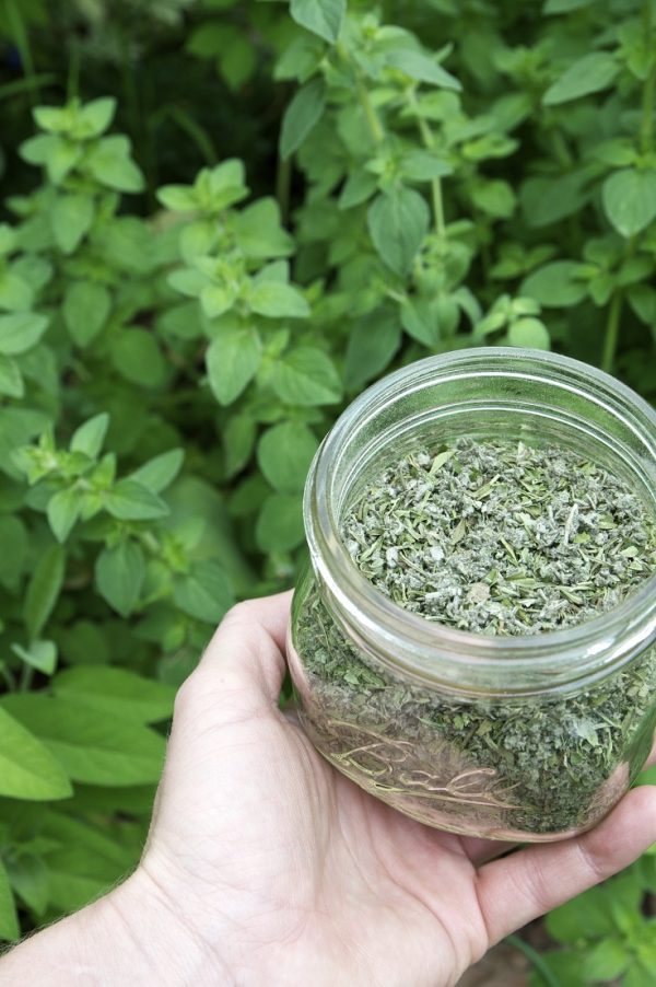 10 vegetables and herbs that can take root in water 2