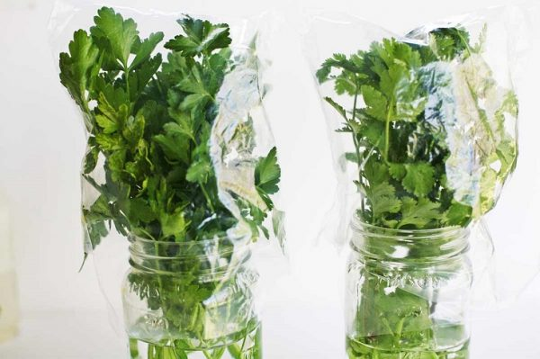 10 vegetables and herbs that can take root in water 4