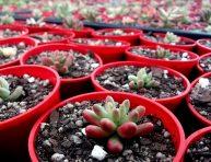imagen Métodos de propagación de cactus y suculentas