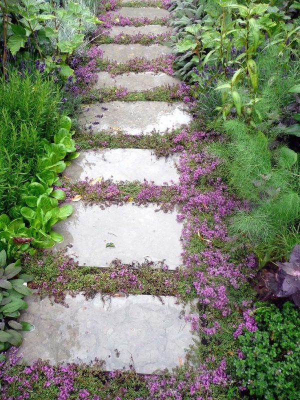 Plantas tapizantes para caminos de jard n for Poner piedras en el jardin