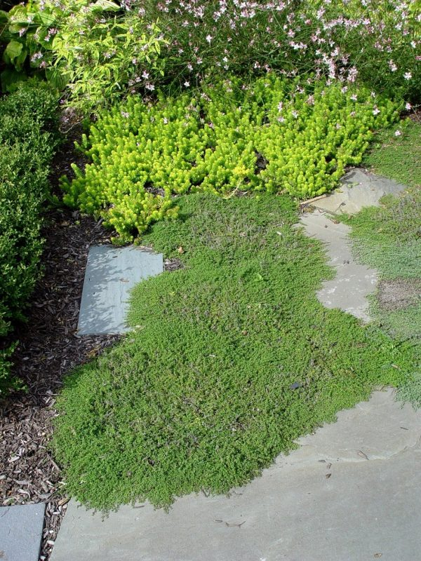 Plants consume a high quantity for garden paths 5