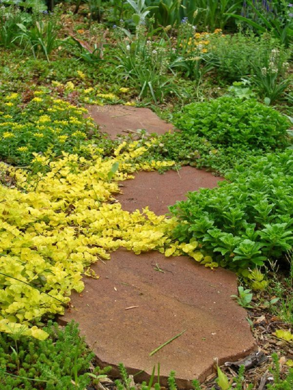 Plants consume a high quantity for garden paths 6