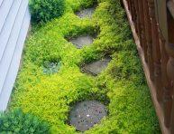 imagen Plantas tapizantes para caminos de jardín