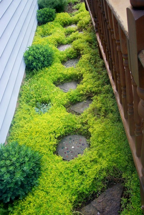 Plants consume a high quantity for garden paths 7