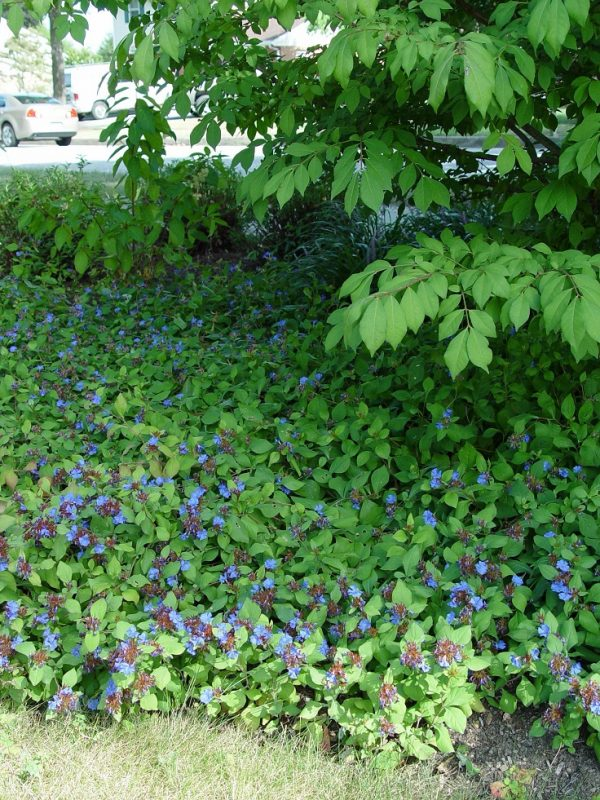 Plants consume a high quantity for garden paths 8