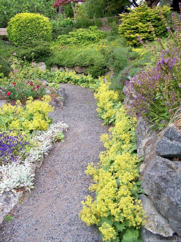 Plantas tapizantes para caminos de jard n for Plantas para rocallas