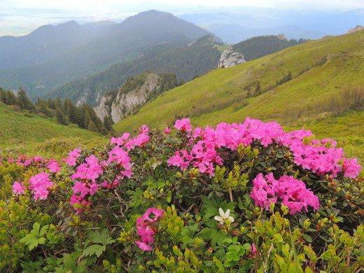 Plants that need exclusively acidic soils 2