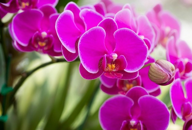 What is the appropriate substrate for each type of orchid 1