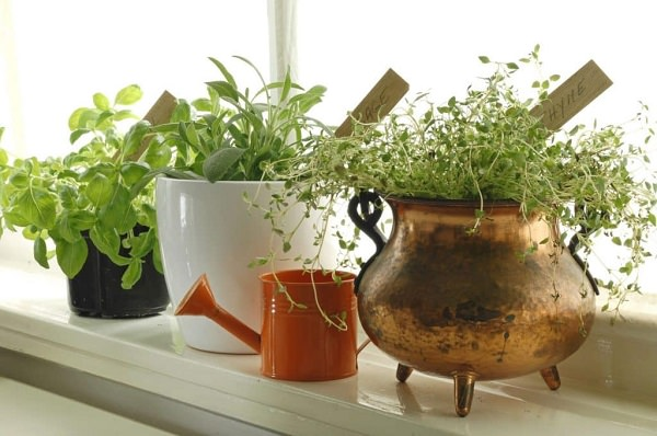 7 tips for growing herbs in pots 2
