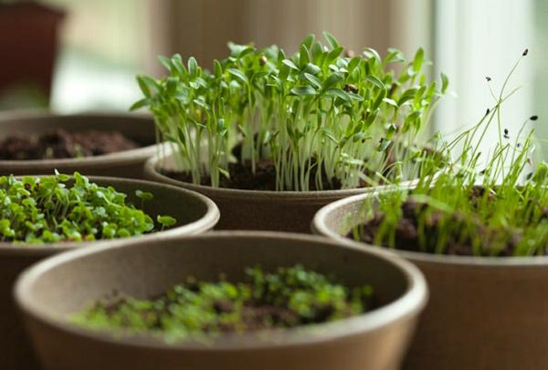 7 tips for growing herbs in pots 4