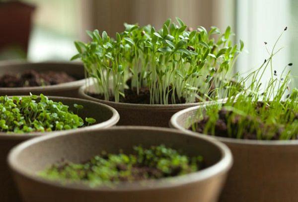 7 consejos para cultivar hierbas arom ticas en maceta - Plantas aromaticas en maceta ...