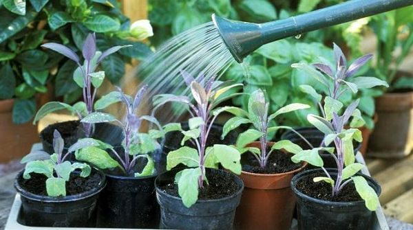 7 tips for growing herbs in pots 5