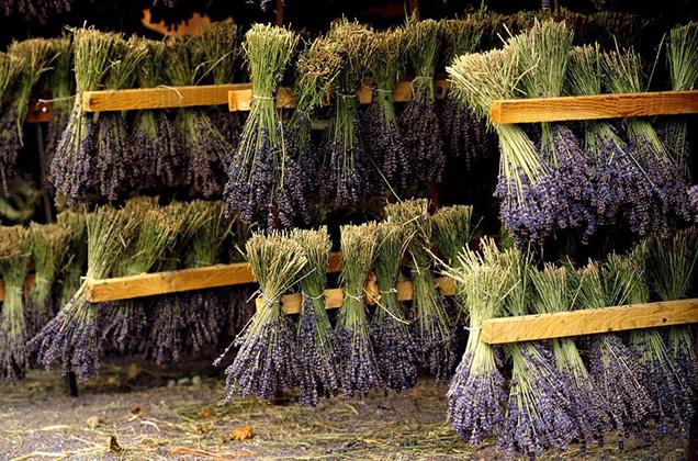 7 Hierbas Aromáticas Para Secar