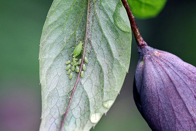 7 pests that you should never ignore in your garden 1