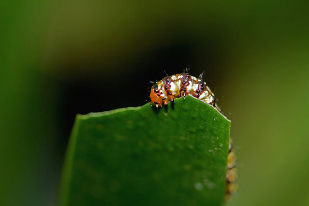 7 pests that you should never ignore in your garden 2