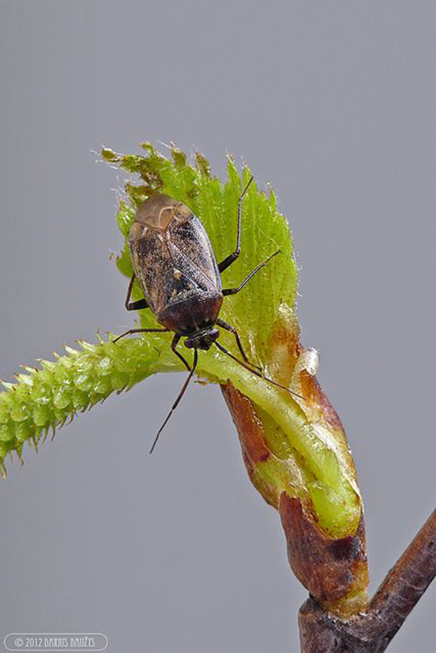 7 pests that you should never ignore in your garden 5