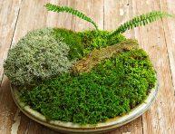 imagen Cómo hacer un jardín de musgo en miniatura