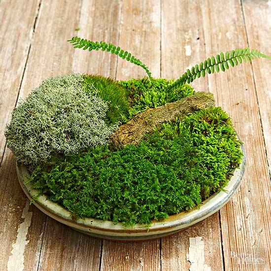 C mo hacer un jard n de musgo en miniatura for Jardines en miniatura