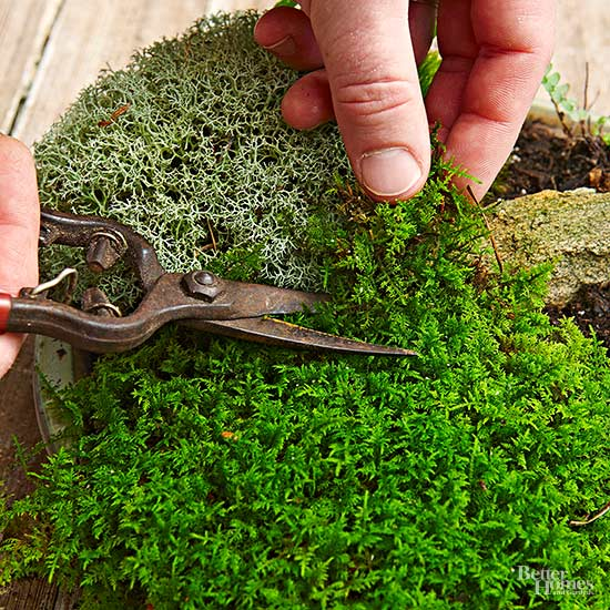 How to make a moss garden in miniature 5