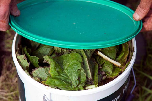 How to prepare fertilizer from comfrey 3