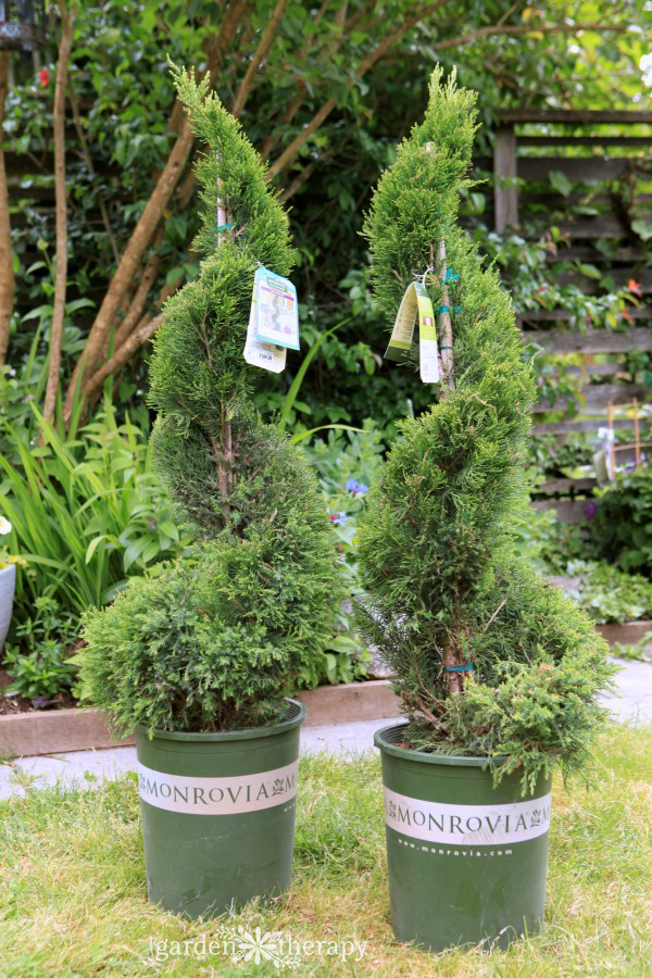 Care and maintenance of a topiary decorative 2
