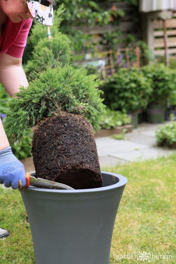 Care and maintenance of a topiary decorative 5