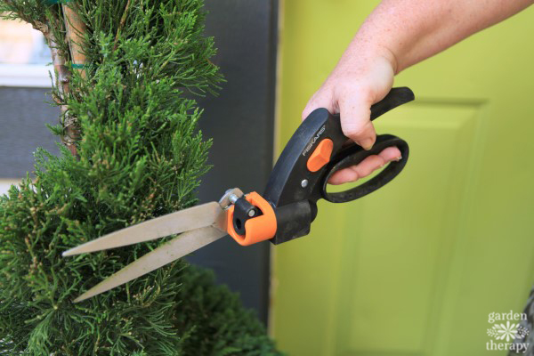 Care and maintenance of a topiary decorative 9