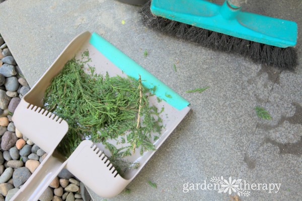 Care and maintenance of a topiary decorative 11