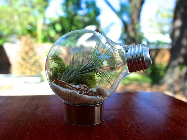 Decorating Ideas with air plants 1