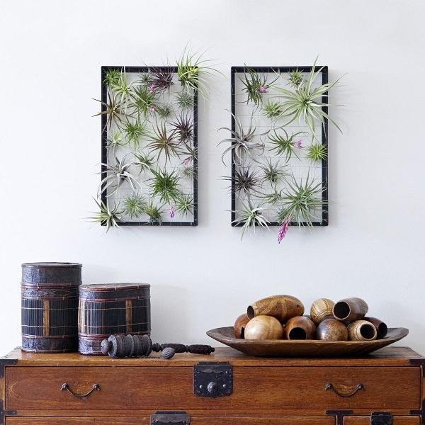 Ideas de decoraci n con plantas a reas for Ideas para colgar plantas