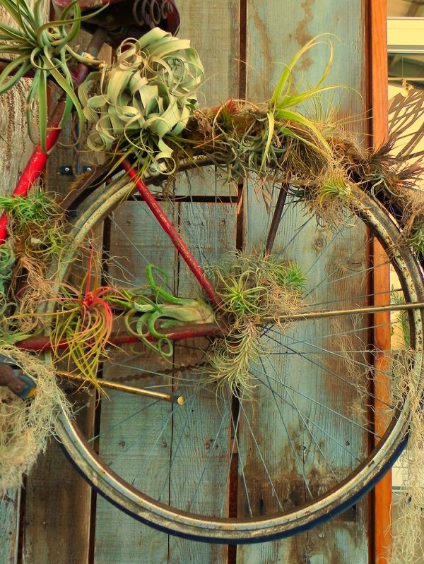 Decorating Ideas with air plants 4