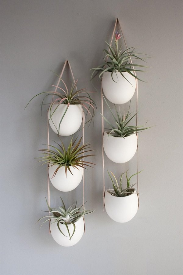 Decorating Ideas with air plants 8