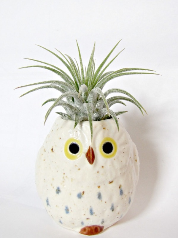 Decorating Ideas with air plants 9