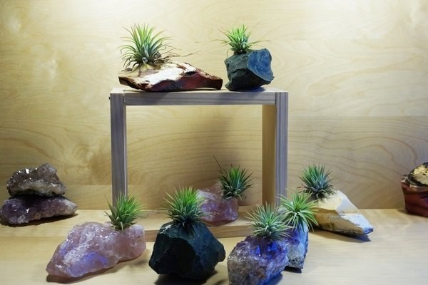Decorating Ideas with air plants 10