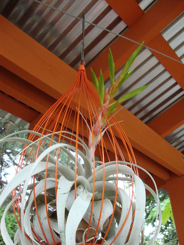 Decorating Ideas with air plants 11