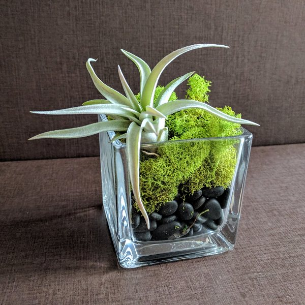 Decorating Ideas with air plants 13