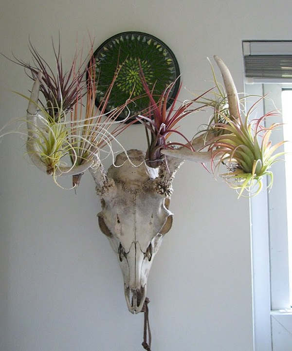 Decorating Ideas with air plants 14