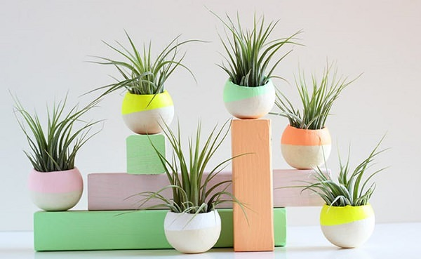 Decorating Ideas with air plants 20