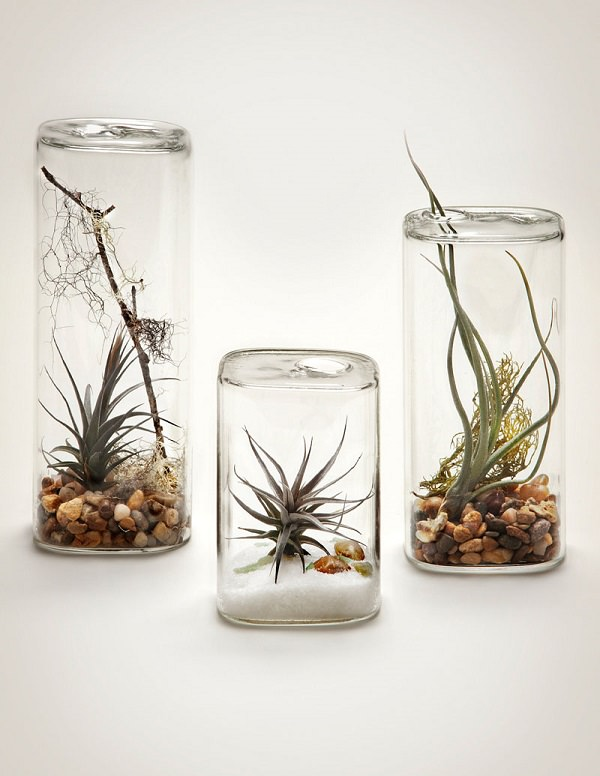 Decorating Ideas with air plants 21