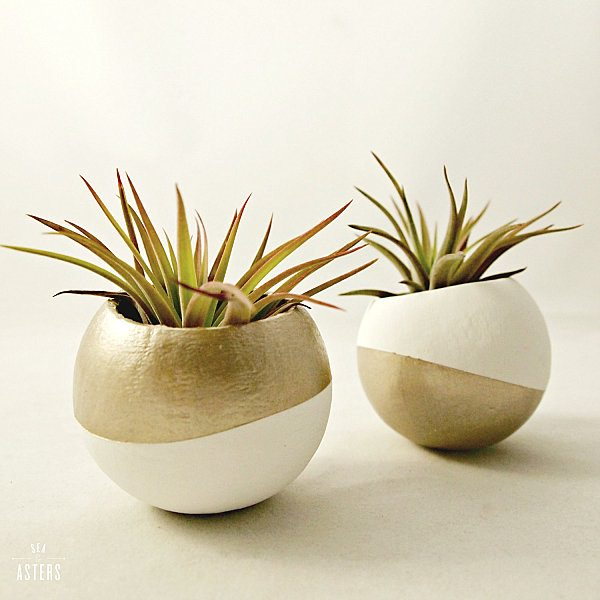 Decorating Ideas with air plants 22