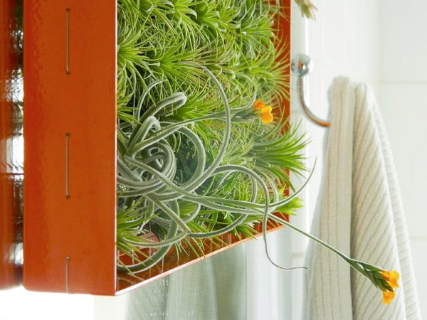 Decorating Ideas with air plants 23