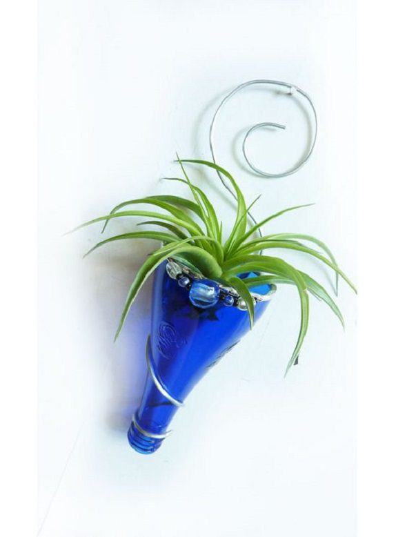 Decorating Ideas with air plants 24