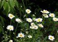imagen Las peores plantas para los alérgicos